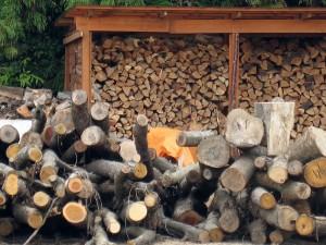 woody-biomass04